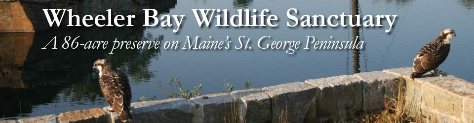 Wheeler Bay Wildlife Sanctuary